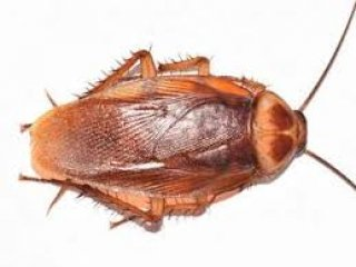 Uklanjanje žohara iz stana